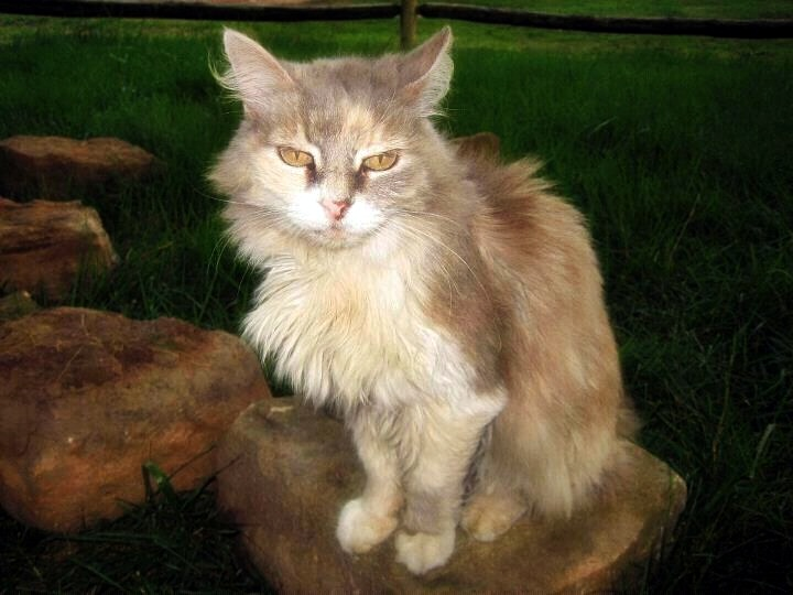 Valerie Rushers 18 year old cat Peaches