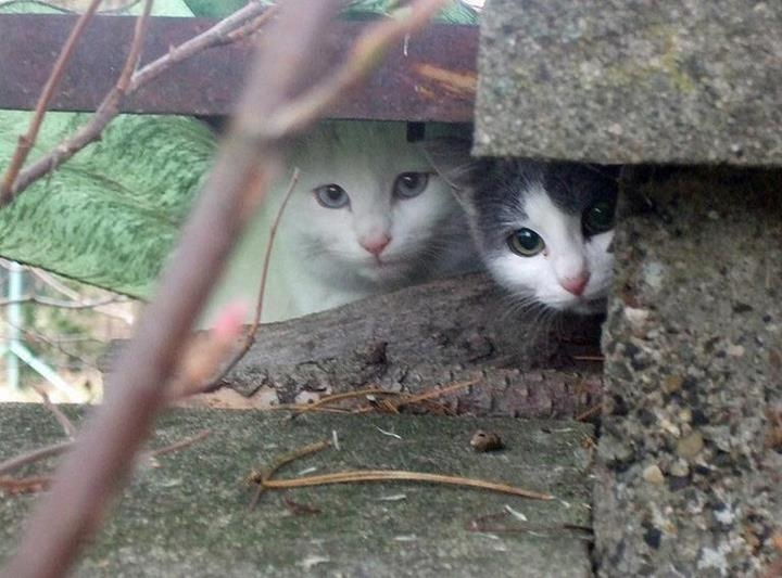 anxious cats in a human world