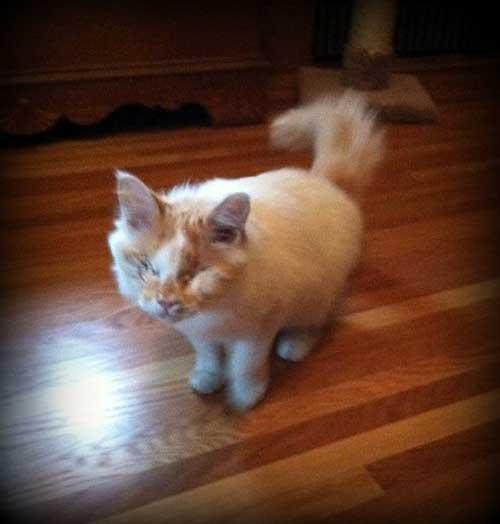 Blind Cat Mea