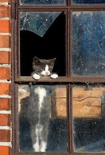 cat at broken window
