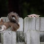 cat chasing squirrel