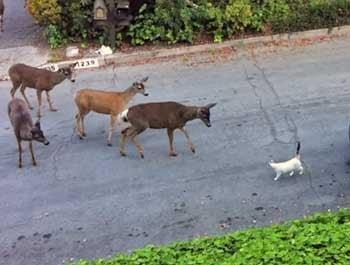 Cat Encounters Deer