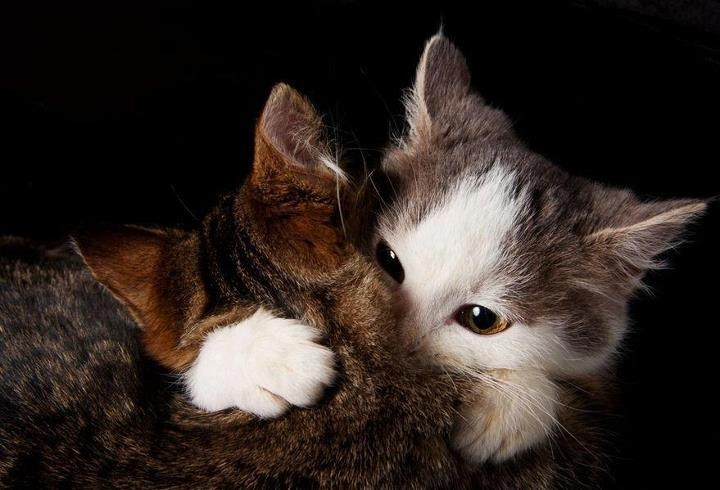 cat hugs another cat