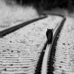 Cat on railtrack