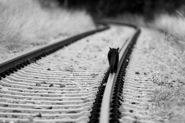Cat on railtrack