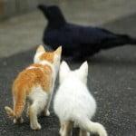 cat team work