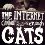 The internet cannot have enough cats!