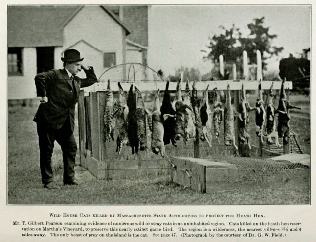 Cats killed to protect a species of bird, the Health Hen, 1916.