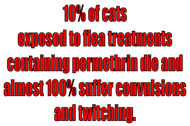 Cats Poisoned by Dog Flea Treatments