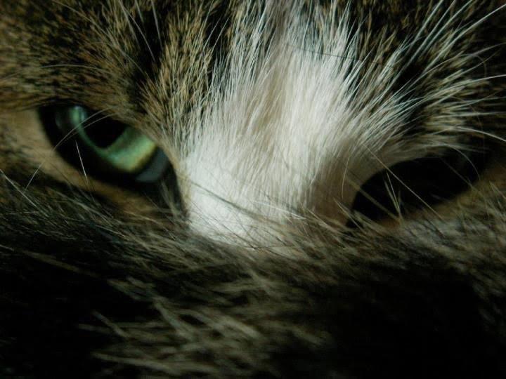 Dreamy Eyed Cat