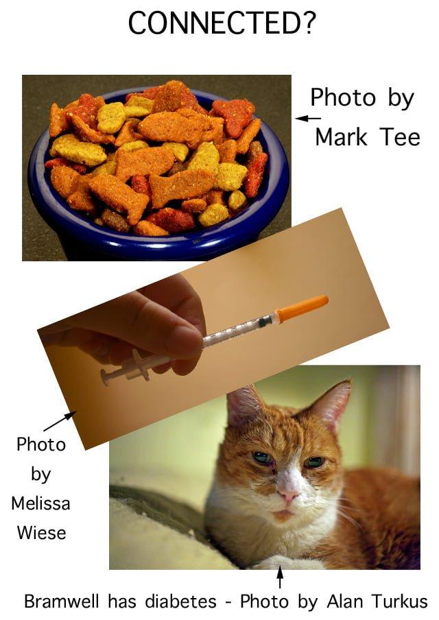 Feline Diabetes Connected to Dry Cat Food?