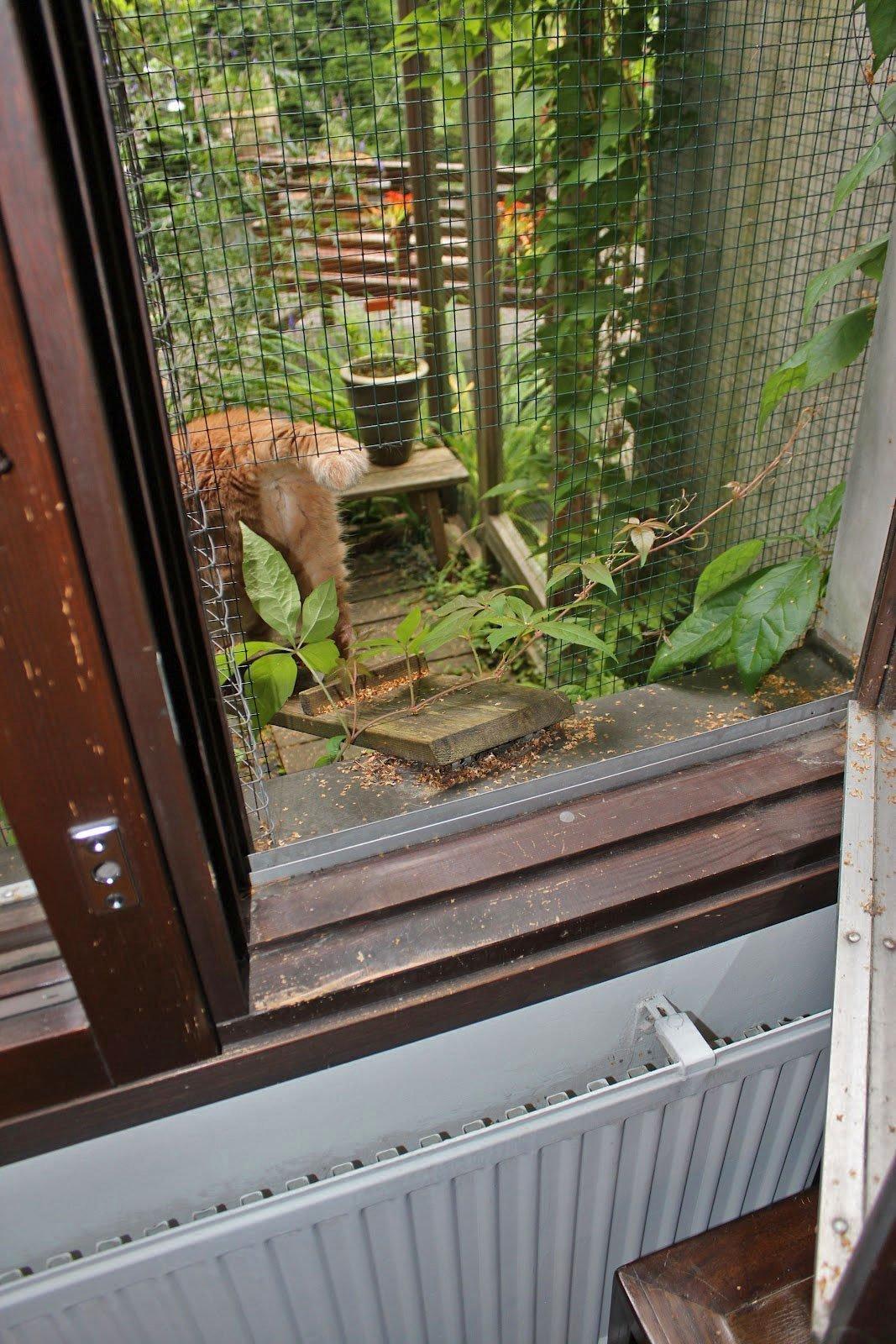 Finnish Cat Enclosure. Helmi Going into It