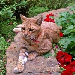 Sabini in the Garden