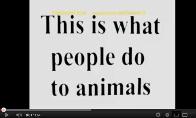 Animal Cruelty Video on YouTube