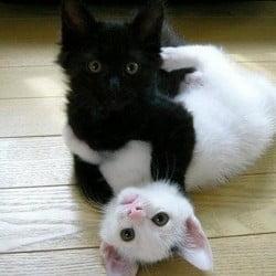 Black Cat and White Cat