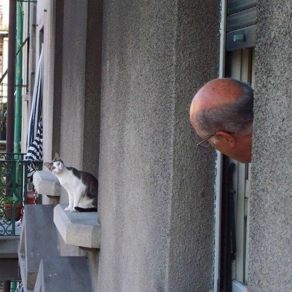 Cat and Man at Windows