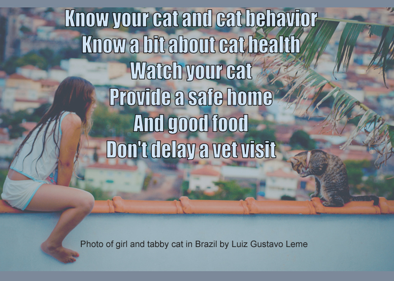 Cat Health Facts For Kids