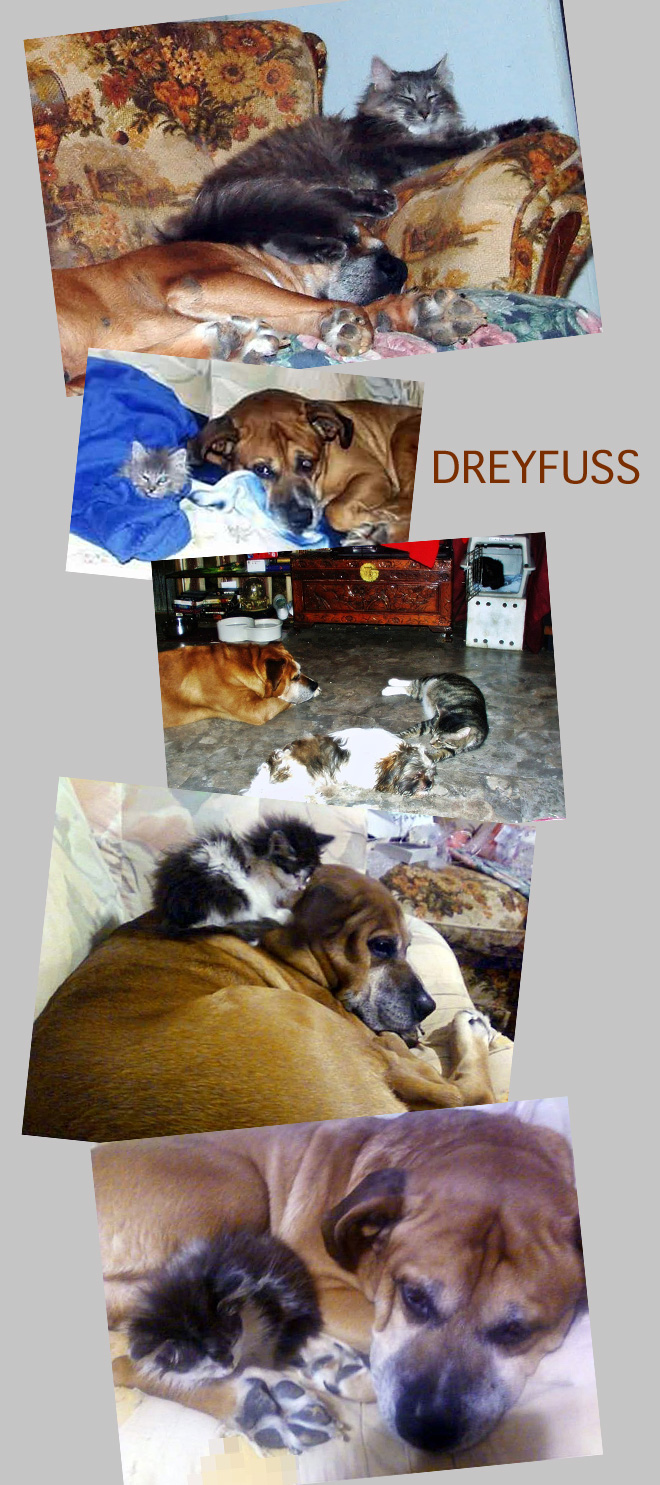 Dreyfuss a Dog Who Liked Cats