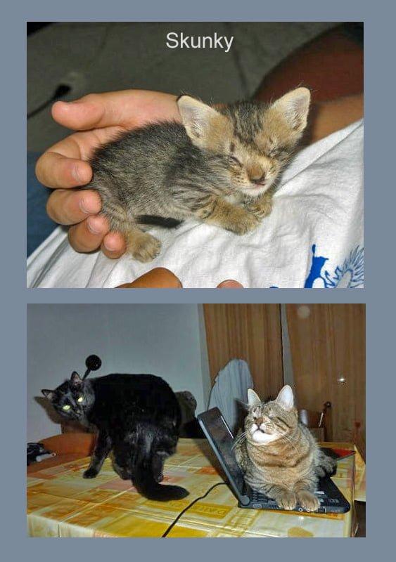Skunky a Rescued Blind KItten