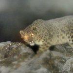 Camera Trap Photos of Wild Cats