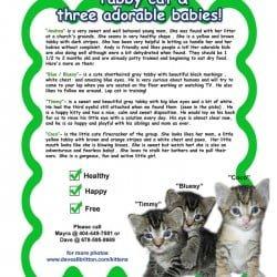 Three Adorable Babbies