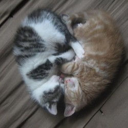 Black Tabby and Ginger Tabby Cats Together