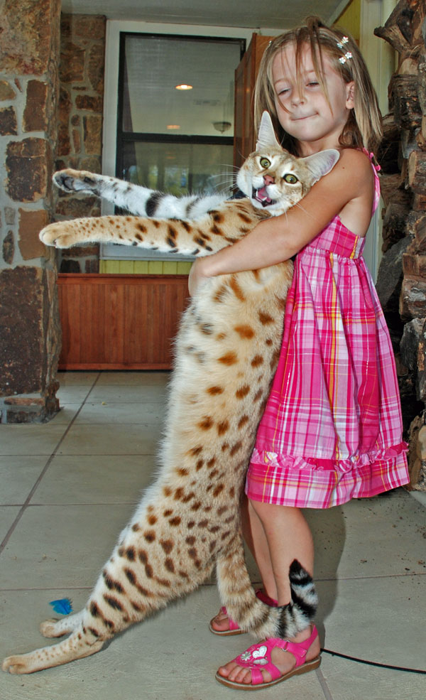 Magic and Leone. Magic was the tallest domestic cat at the time