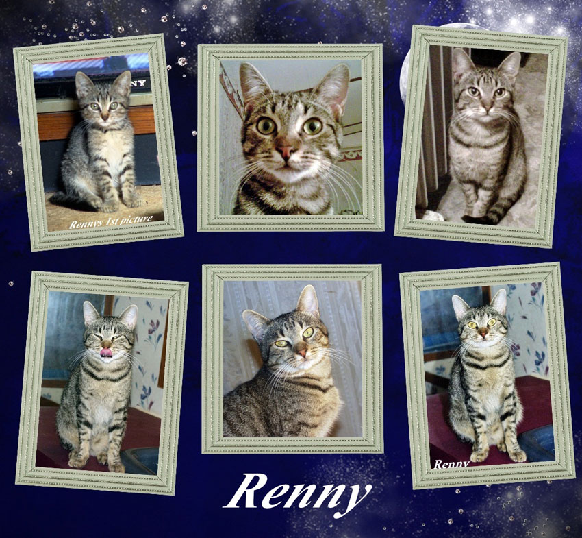 Renny My Feral Cat
