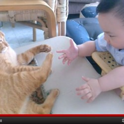 Baby Checks Out Cat