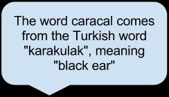 Carcaal Name