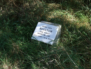 Cat Grave