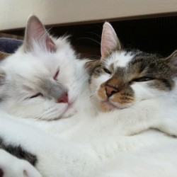 Cat Hugs and Friendship