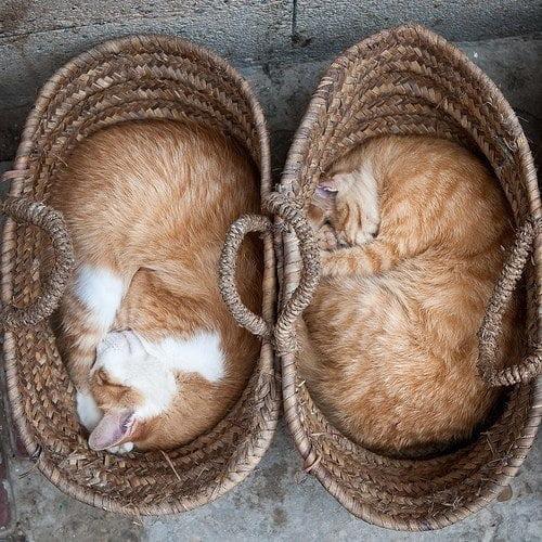 Cat Symmetry and Harmony