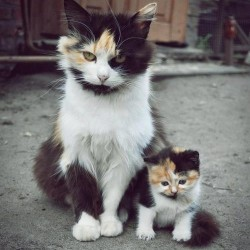 Mom Cat and Kitten Cat