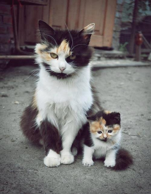 Mom Cat and Kitten Cat