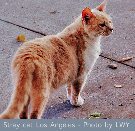 Stray Cat Los Angeles