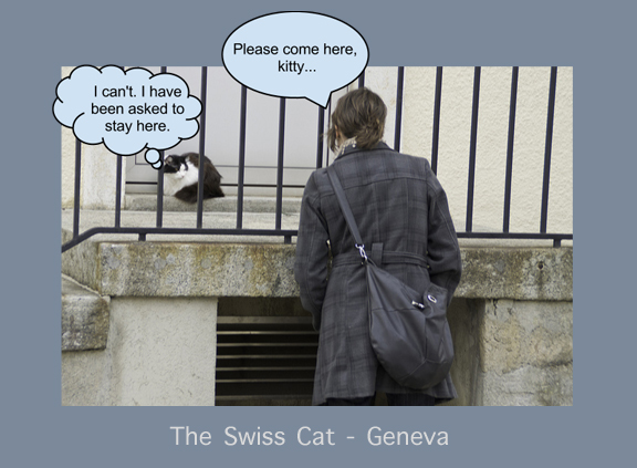 Swiss Cat Geneva