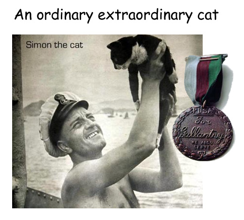 Cat Bravery Awards