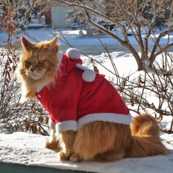 Dante at Christmas