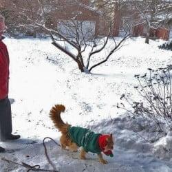 Dante Walking in Snow with Overcoat