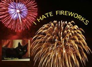 Fireworks Terrify Cats