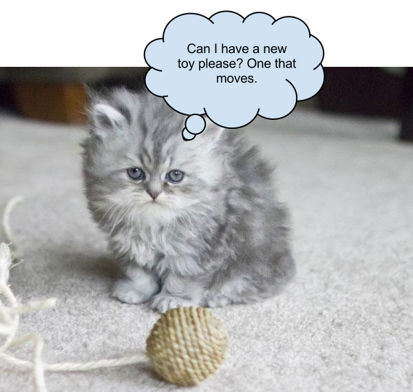 Unhappy Kitten Wants Stimulation?
