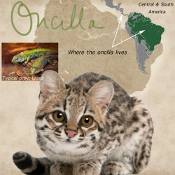 Oncilla Cat Facts For Kids