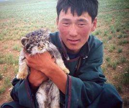 Pallas's cat in Mongolia