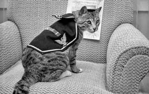 Pooli US ship's cat during World War 2