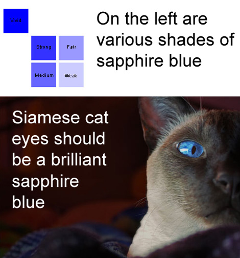 Sapphire Blue Eyes of Siamese