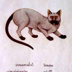 Original Siamese Cat