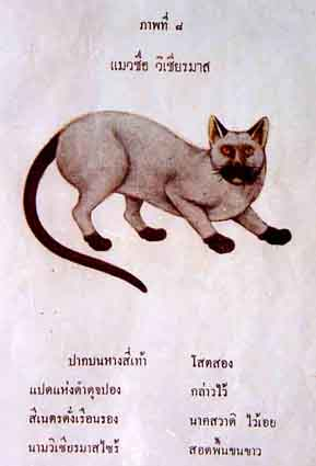 Original Siamese Cat