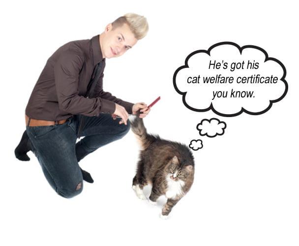 Cat Welfare