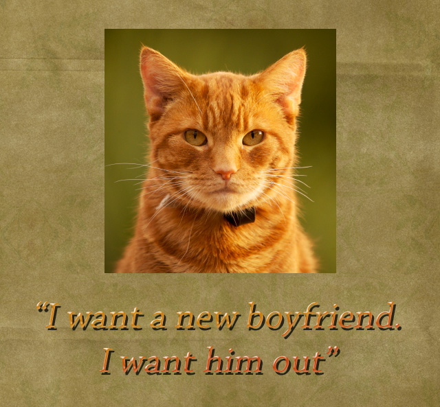 Female Cat Wants New Male Cat Friend